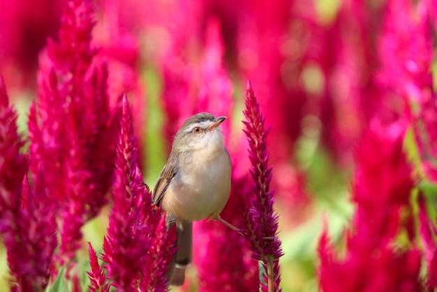 Mały Ptak Siedzący Na Czerwonych Kwiatach Premium Zdjęcia
