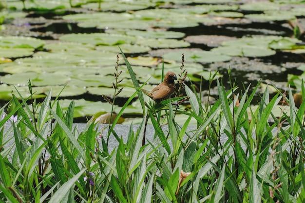 Mały ptak z nenuphar w ogrodzie botanicznym Premium Zdjęcia