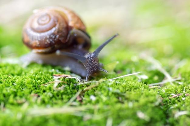 Mały ślimak Skrada Się Po Mchu Premium Zdjęcia