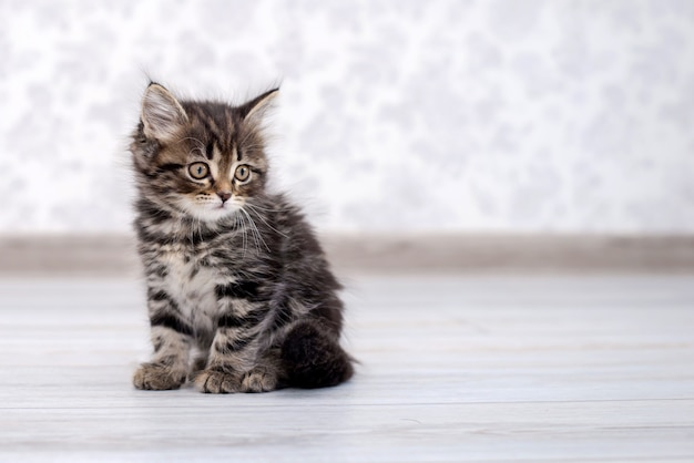 Mały śmieszny kotek na podłodze Premium Zdjęcia