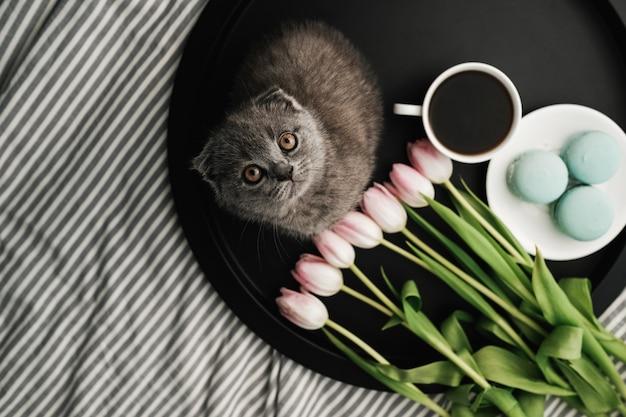 Mały Szkocki Kot Siedzi Na Tacy Z Francuskimi Makaronikami I świeżymi Tulipanami Z Filiżanką Kawy Premium Zdjęcia