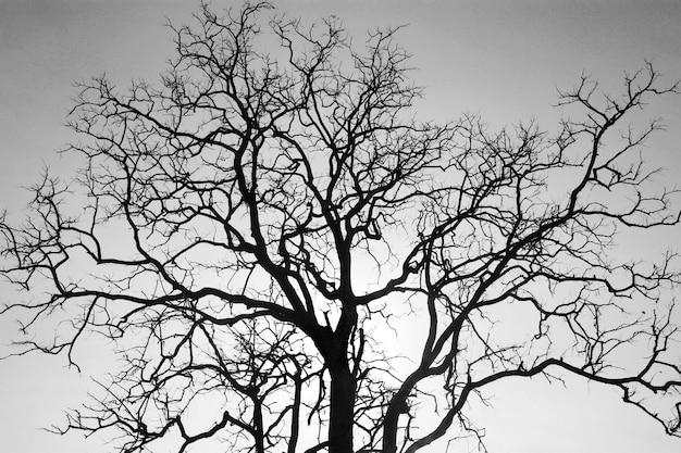Martwa Gałąź Drzewa, Czarno-białe. Premium Zdjęcia