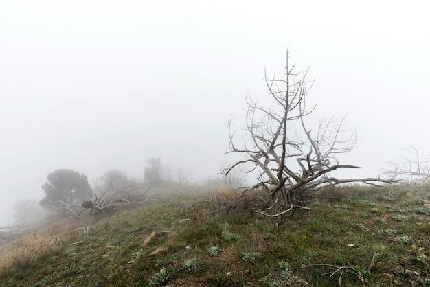 Martwe drzewa we mgle. straszny mistyczny krajobraz Premium Zdjęcia