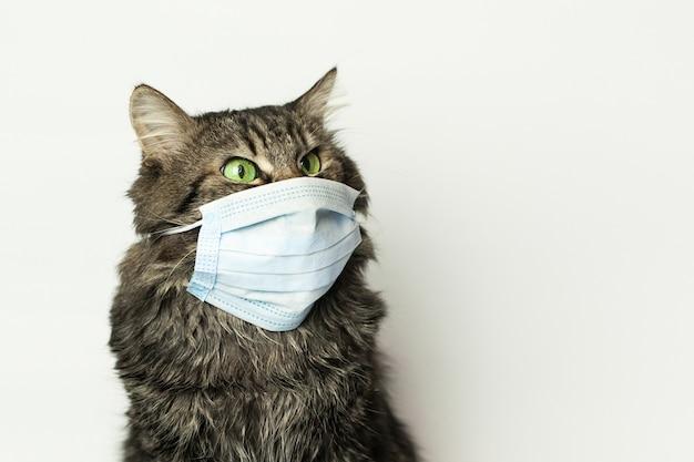 Maska Medyczna Dla Kota Chronionego Przed Wirusem Kota W Domu Premium Zdjęcia