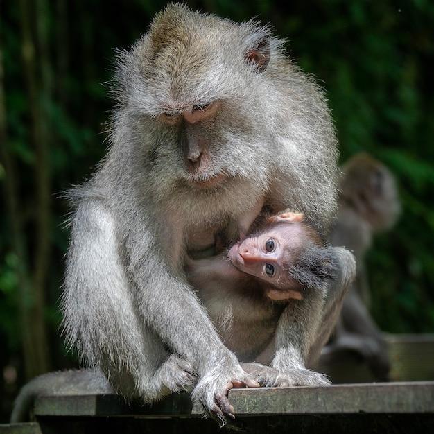 Matka Makaka Rezus I Jej Dziecko Darmowe Zdjęcia