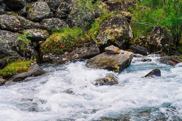Mchy i porosty oraz bogata roślinność na kamieniach i głazach w pobliżu górskiego potoku. Premium Zdjęcia