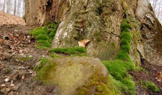 Mech, Zielony, Drzewo Darmowe Zdjęcia