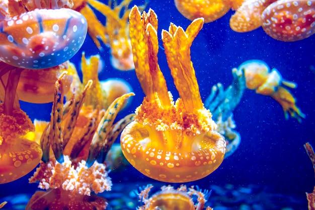Meduza Pomarańczowa Premium Zdjęcia