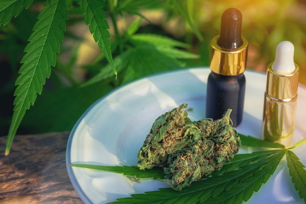 Medyczna Marihuana Marihuana Na Drewnianym Stole Z Ekstraktem Olejku, Pąkami Kwiatowymi I Liśćmi. Premium Zdjęcia