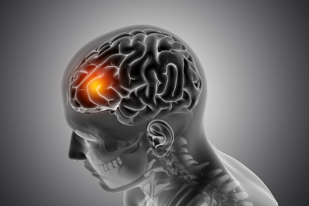 Męska Postać Medyczna Z Podświetlonym Przodem Mózgu Darmowe Zdjęcia