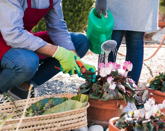 Męski i żeński ogrodnik przycina i nawadnia roślinę w ogrodzie Darmowe Zdjęcia