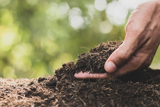 Męskie ręce zbierają ziemię, żeby zasadzić drzewa. Premium Zdjęcia
