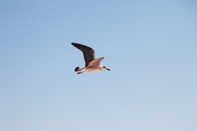 Mewa na niebie. ptak w locie. Premium Zdjęcia