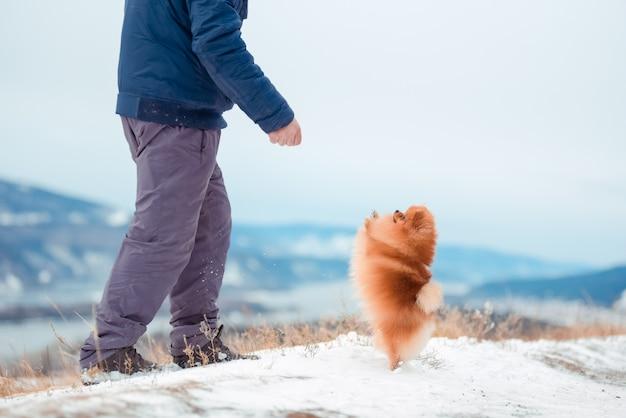 Mężczyzna bawi się z psem rasy szpic czerwony na górze w zimie. Premium Zdjęcia