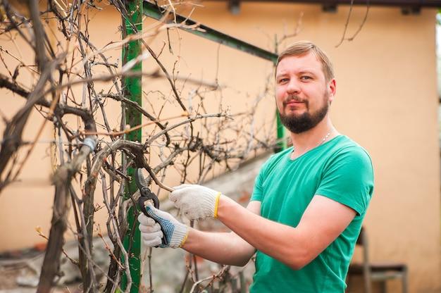 Mężczyzna Kroi Winogrona Na Wiosnę. Mężczyzna Dba O Winnicy Z Bliska I Kopiować Miejsca. Premium Zdjęcia