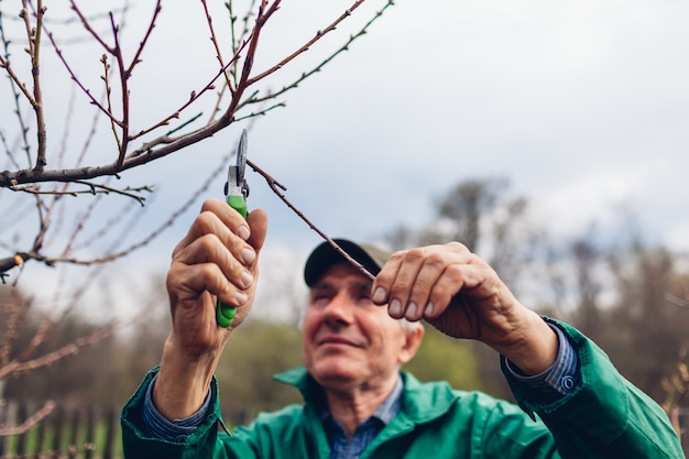 Mężczyzna Przycinanie Drzewa Z Maszynki Do Strzyżenia. Mężczyzna Rolnik Tnie Gałęzie W Jesiennym Ogrodzie Za Pomocą Sekatora Lub Sekatora Premium Zdjęcia
