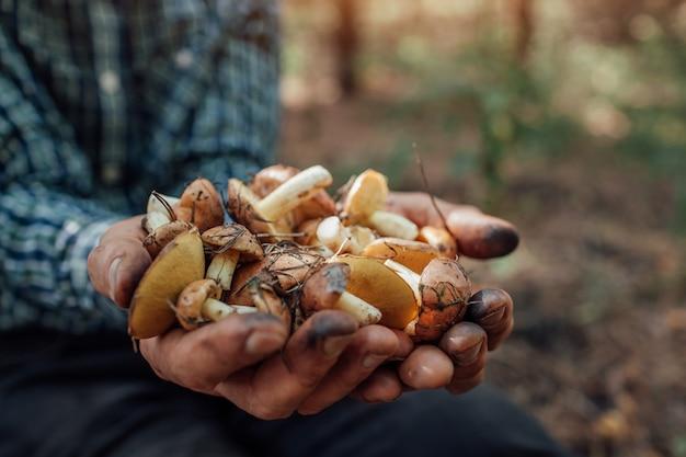 Mężczyzna trzyma garść tłustych grzybów Premium Zdjęcia