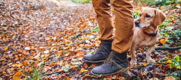 Mężczyzna wycieczkuje w jesień lesie z psem Premium Zdjęcia