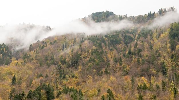 Mgła Na Górze, Zachodni Sosnowy Las W Jesieni Premium Zdjęcia