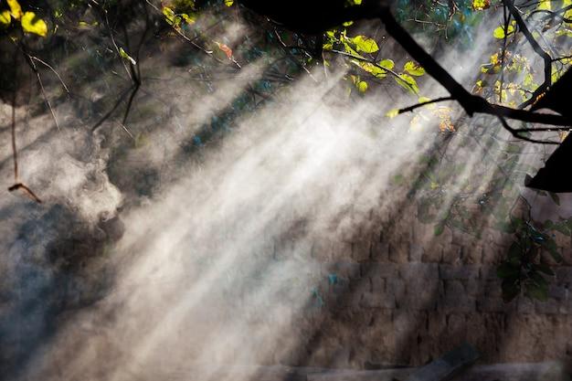 Mgła w lesie przed słońcem mglisty las przed promieniem słońca Premium Zdjęcia