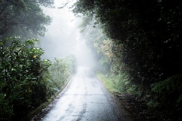 Mglista droga w lesie Darmowe Zdjęcia
