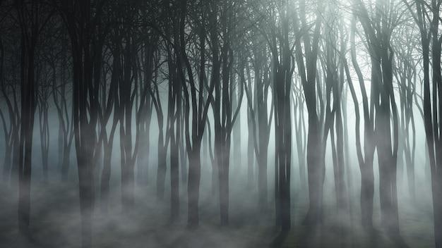 Mglisty Krajobraz Leśny Darmowe Zdjęcia