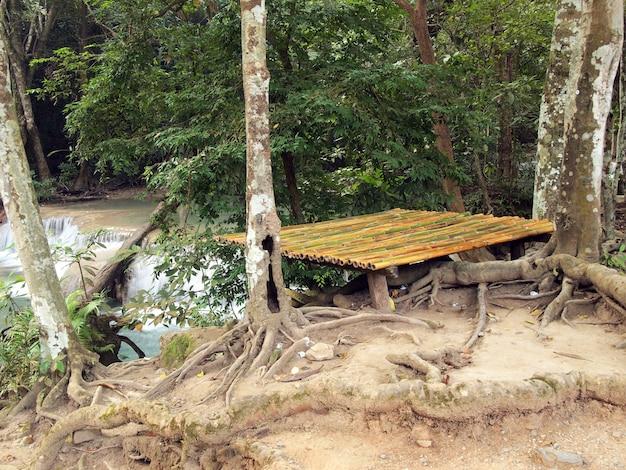Miejsce Piknikowe W Lesie Premium Zdjęcia