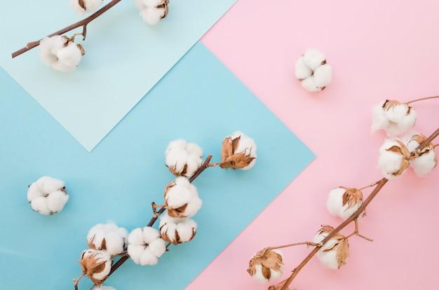 Mieszkanie Leżało Bawełniane Kwiaty Na Kolorowe Tło Darmowe Zdjęcia