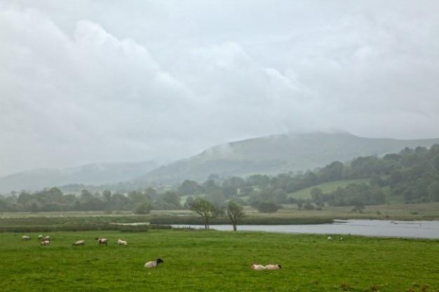 Misty Pastwisko Hdr Darmowe Zdjęcia