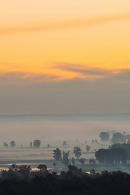 Mistyczny widok na las pod mgiełką wczesnym rankiem. mgła wśród sylwetek drzew pod niebem przedświtu. odbicie światła złota w wodzie. spokojny poranek nastrojowy, minimalistyczny krajobraz majestatycznej przyrody. Premium Zdjęcia