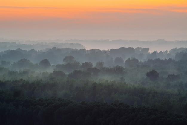 Mistyczny widok z góry na las pod mgłą wczesnym rankiem. mgła wśród warstw z sylwetkami drzew w tajdze pod ciepłym niebem przedświtu. rano nastrojowy, minimalistyczny krajobraz o majestatycznej naturze. Premium Zdjęcia