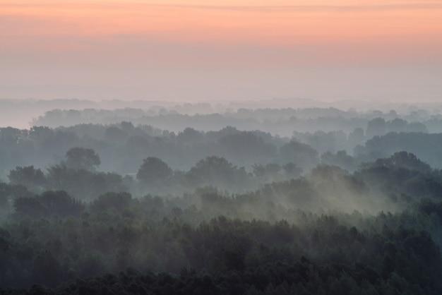 Mistyczny widok z góry na las pod mgłą wczesnym rankiem Premium Zdjęcia