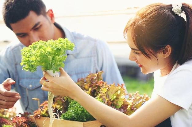 Młoda Kobieta Zbiera Warzywa Z Hydroponicznej Farmy, A Młody Człowiek Pomaga. Oboje Są Szczęśliwi. Premium Zdjęcia