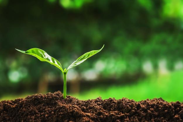 Młoda roślina rośnie na ziemi w ogrodzie w świetle poranka. koncepcja uratować ziemię Premium Zdjęcia