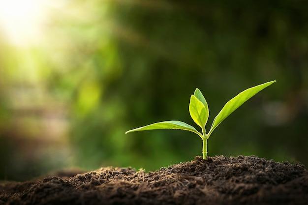 Młoda Roślina Rośnie W Słońcu W Przyrodzie Premium Zdjęcia