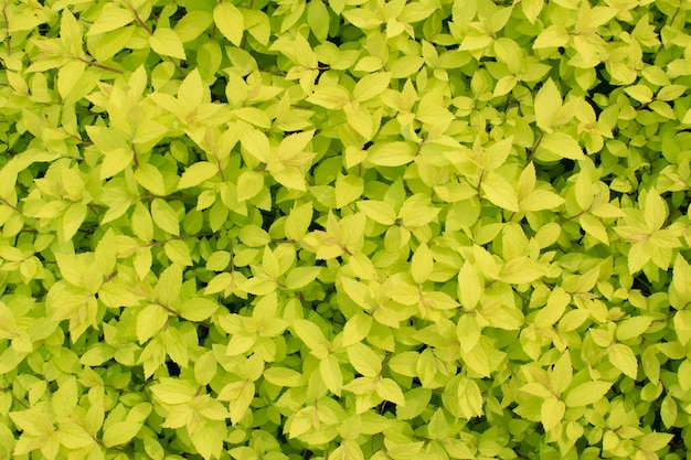 Młode Jasnozielone Wiosenne Liście Premium Zdjęcia