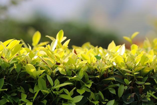 Młode Pędy Drzew W świetle Dziennym Premium Zdjęcia