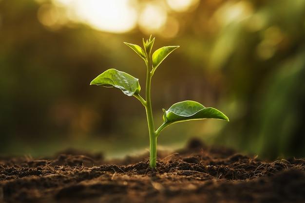 Młody drzewny dorośnięcie w ogródzie z wschodem słońca. eko koncepcja dzień ziemi Premium Zdjęcia
