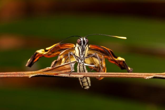 Młody Nowonarodzony Motyl Premium Zdjęcia