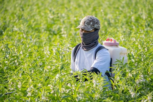 Młody Rolnik Rozpyla Pestycydy (chemikalia Rolnicze) Na Własnym Polu Sezamu Premium Zdjęcia