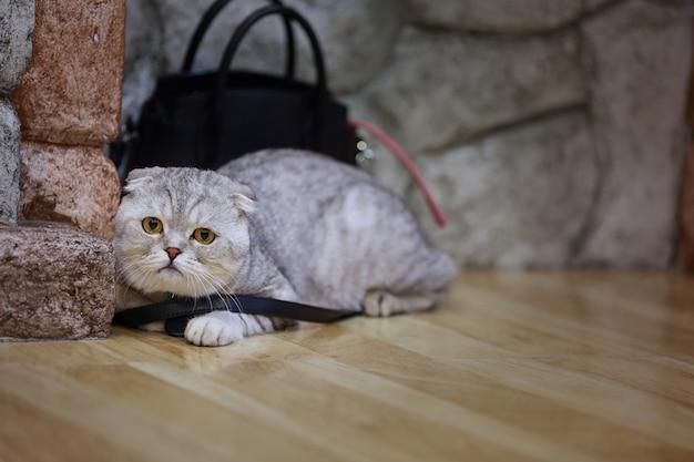 Młody szalony zdziwiony kot robi dużym oko zbliżeniu. Premium Zdjęcia