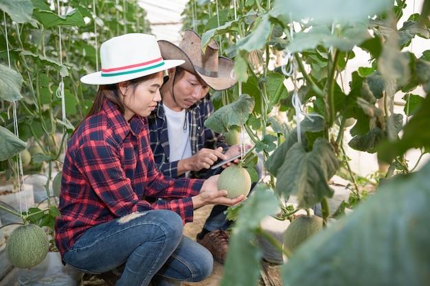 Młodzi rolnicy analizują wzrost efektów melona w gospodarstwach szklarniowych Darmowe Zdjęcia