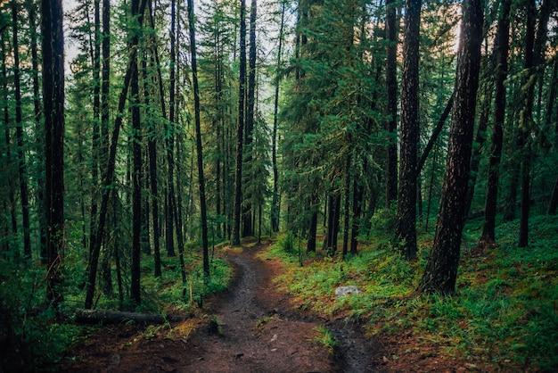 Mokra ścieżka przez las deszczowy Premium Zdjęcia