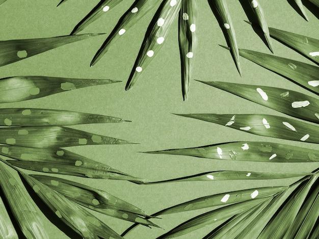 Monochromatyczne paproci opuszcza widok z góry Darmowe Zdjęcia