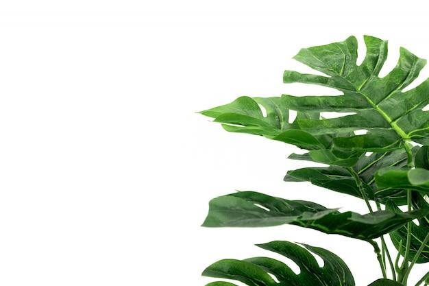 Monstera Tropikalne Liście Palmowe Premium Zdjęcia