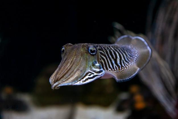Morski Ekosystem Oceaniczny Ekosystemu Mątwy W Dużym Akwarium Premium Zdjęcia