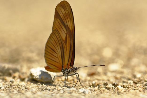 Motyl (dryas Julia) Na Wilgotność Gleby Premium Zdjęcia
