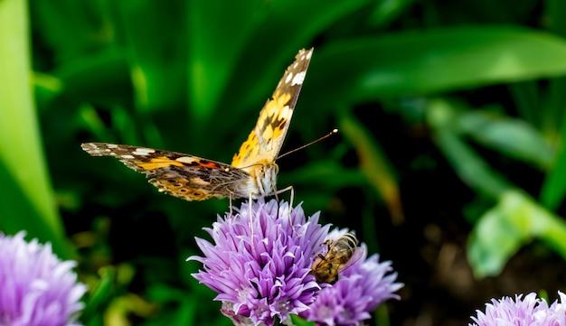Motyl Na Kwiat Koniczyny W Słoneczną Pogodę Premium Zdjęcia