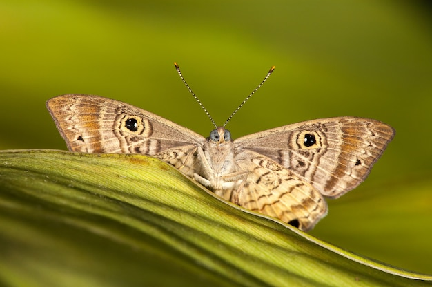 Motyl Na Liściu Premium Zdjęcia
