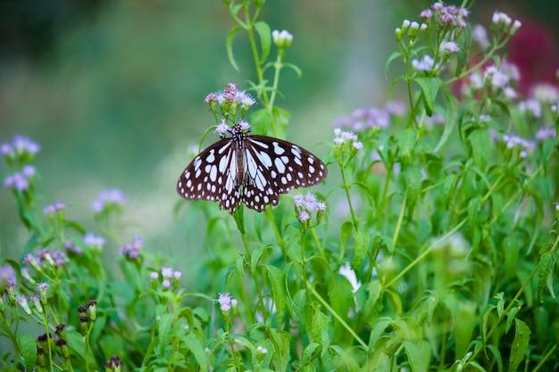 Motyl na roślinie kwiatowej Premium Zdjęcia
